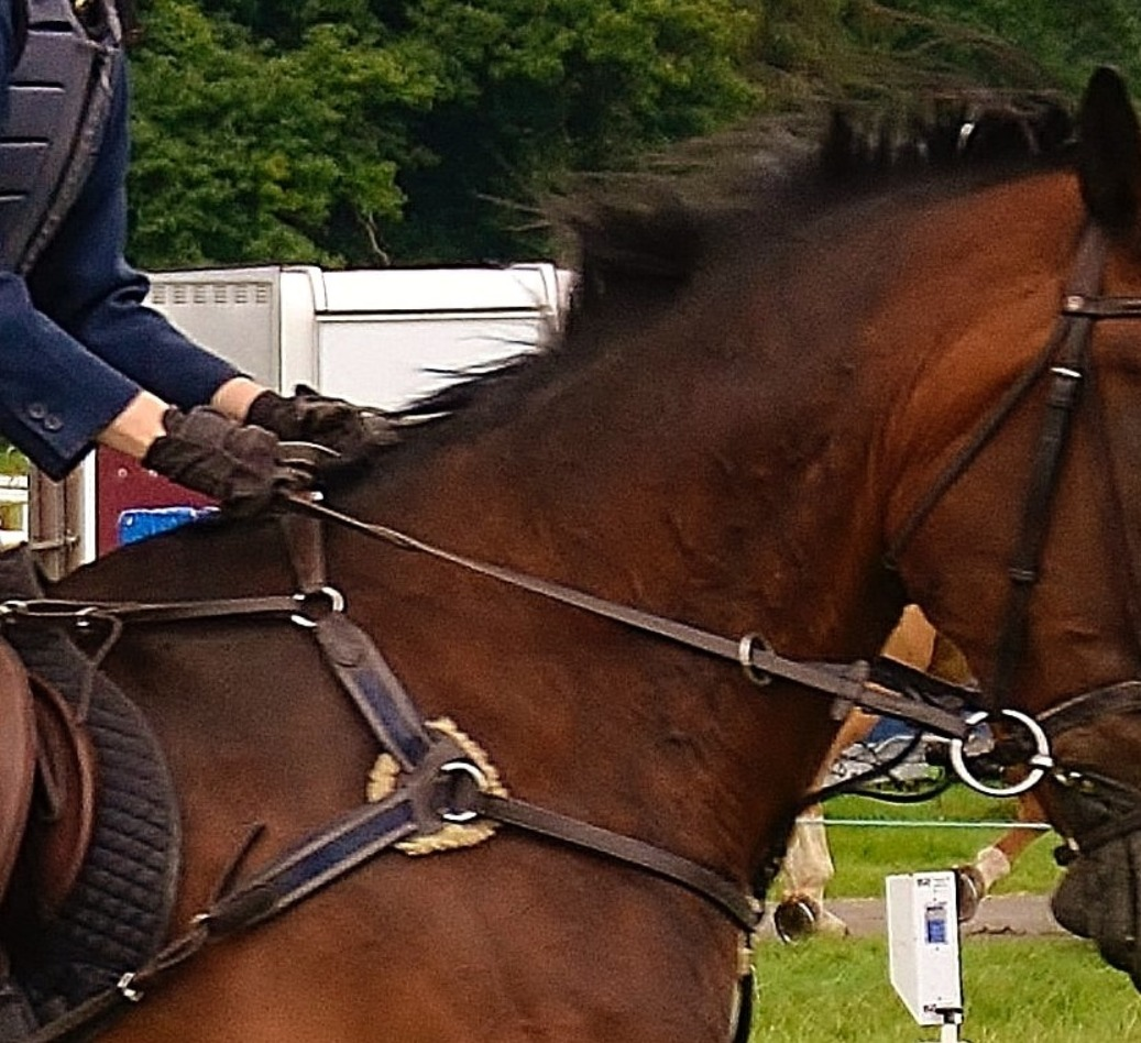 Reins, Martingales, Breastplates and Accessories