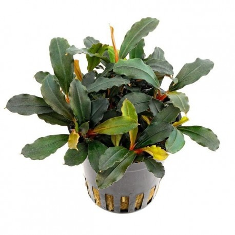 Potted plants that can be attached to wood and rock