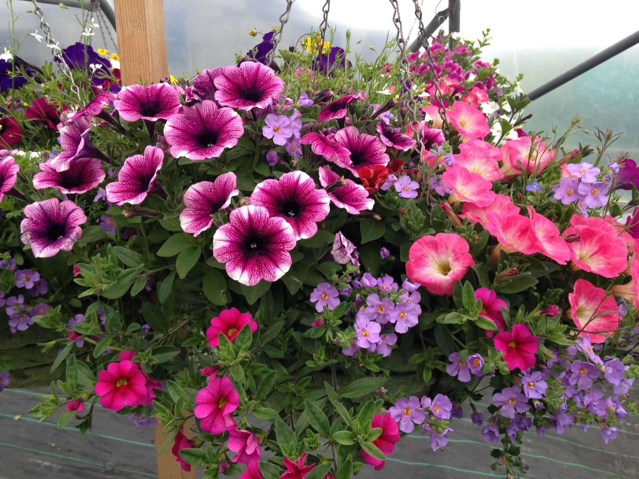Basket and Container Plants