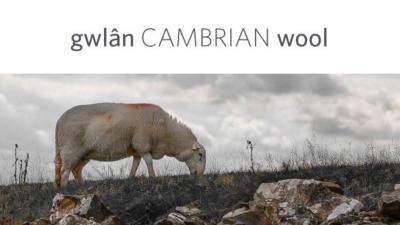 Cambrian Mountains Welsh Wool