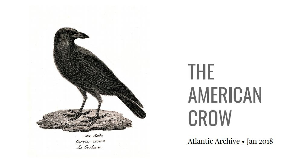 THE COMMON CROW - RESOURCE FILES