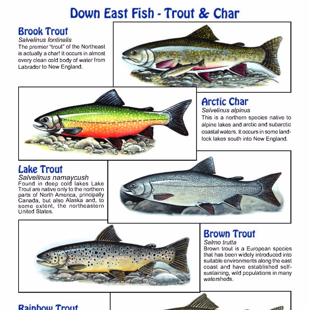 Down East Trout & Char