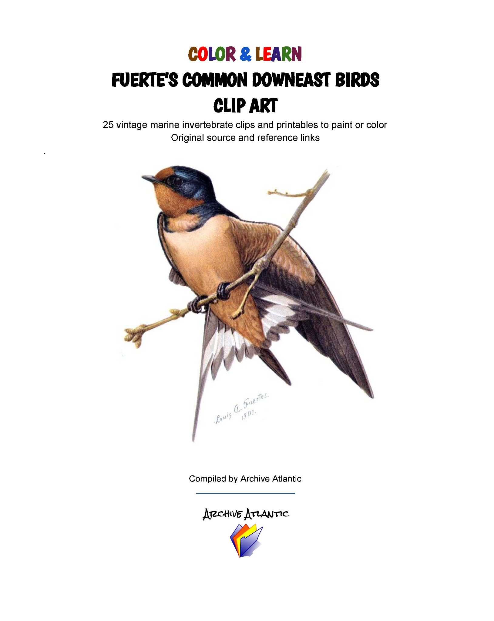 COLOR & LEARN - FUERTE'S COMMON DOWNEAST BIRDS
