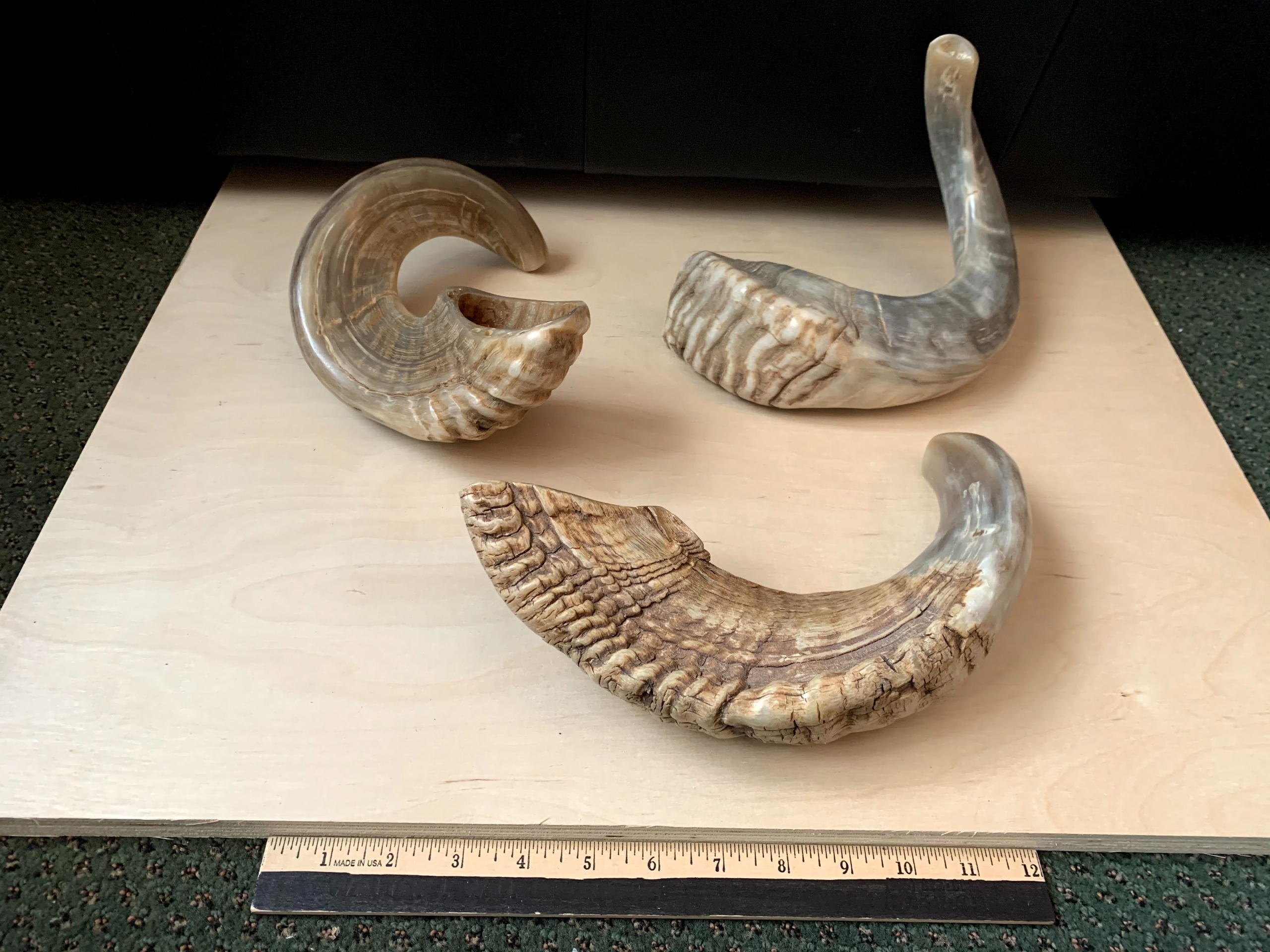 Small Naturally Curved Shofar