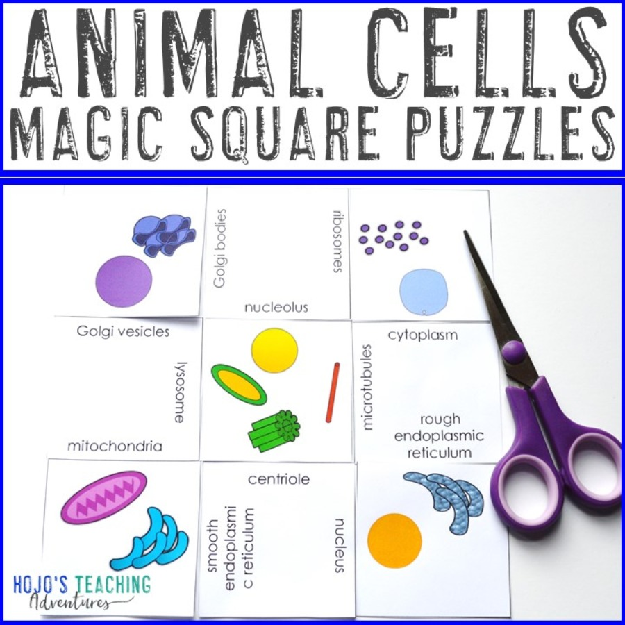 Animal Cell Magic Square Puzzles