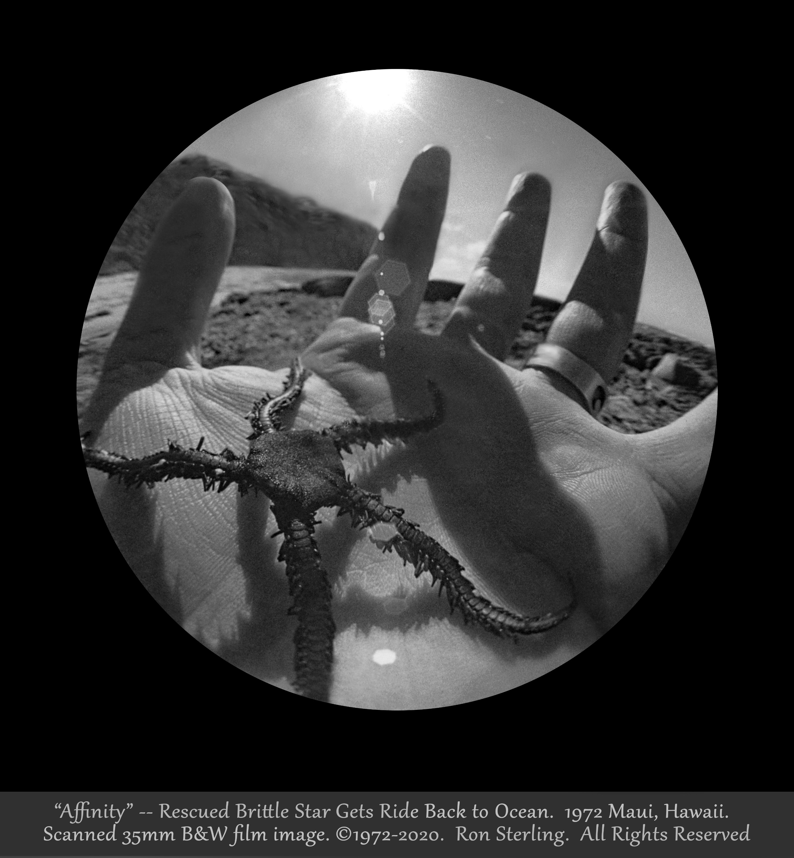 """""""Affinity.""""  A Brittle Star Rescued from Gulls (""""High Five!"""") Maui, Hawaii, 1972. Orig. Signed - Copy"""