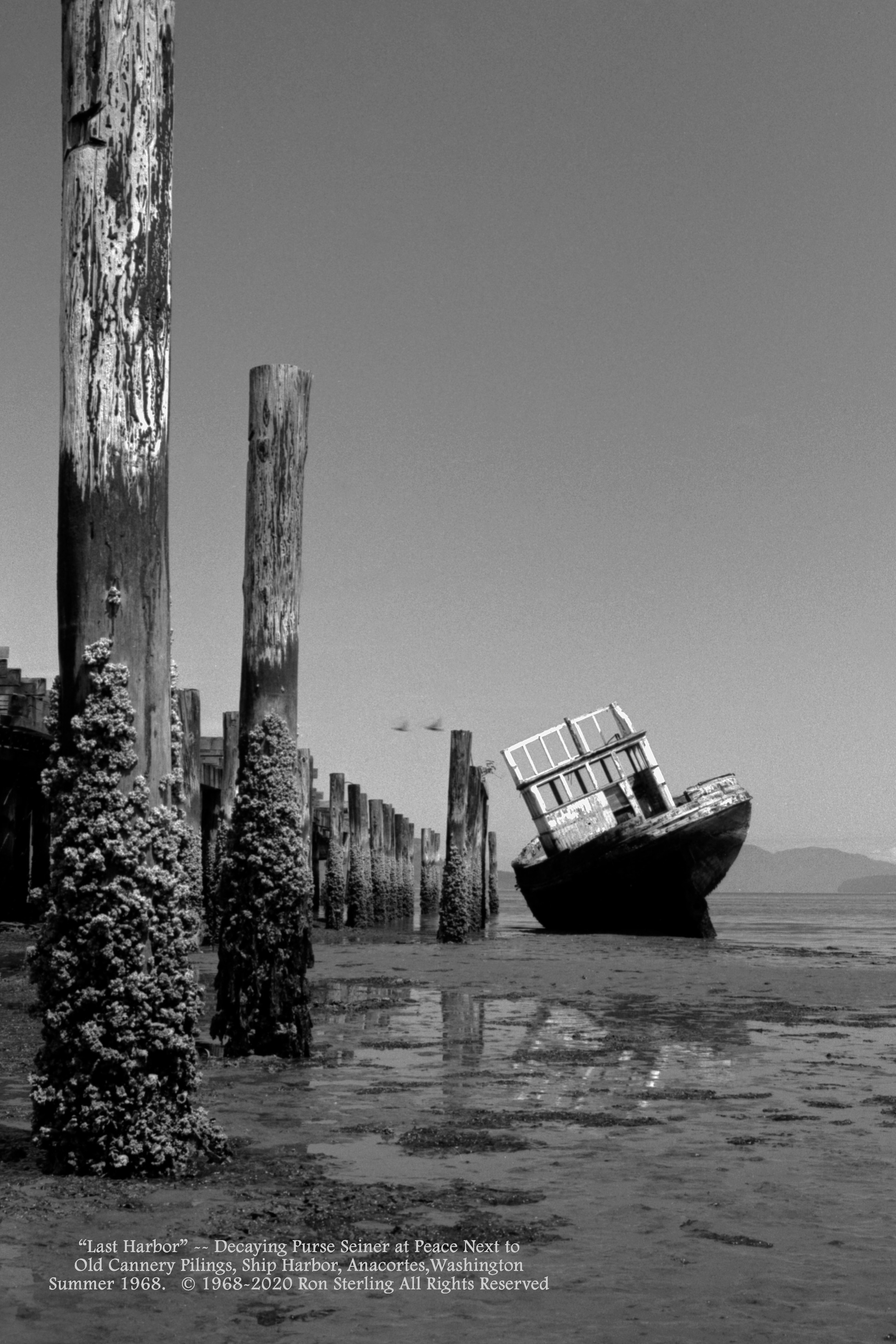 """""""Last Harbor.""""  Decaying Purse Seiner next to Old Cannery Pilings, Ship Harbor, Anacortes, WA 1968"""