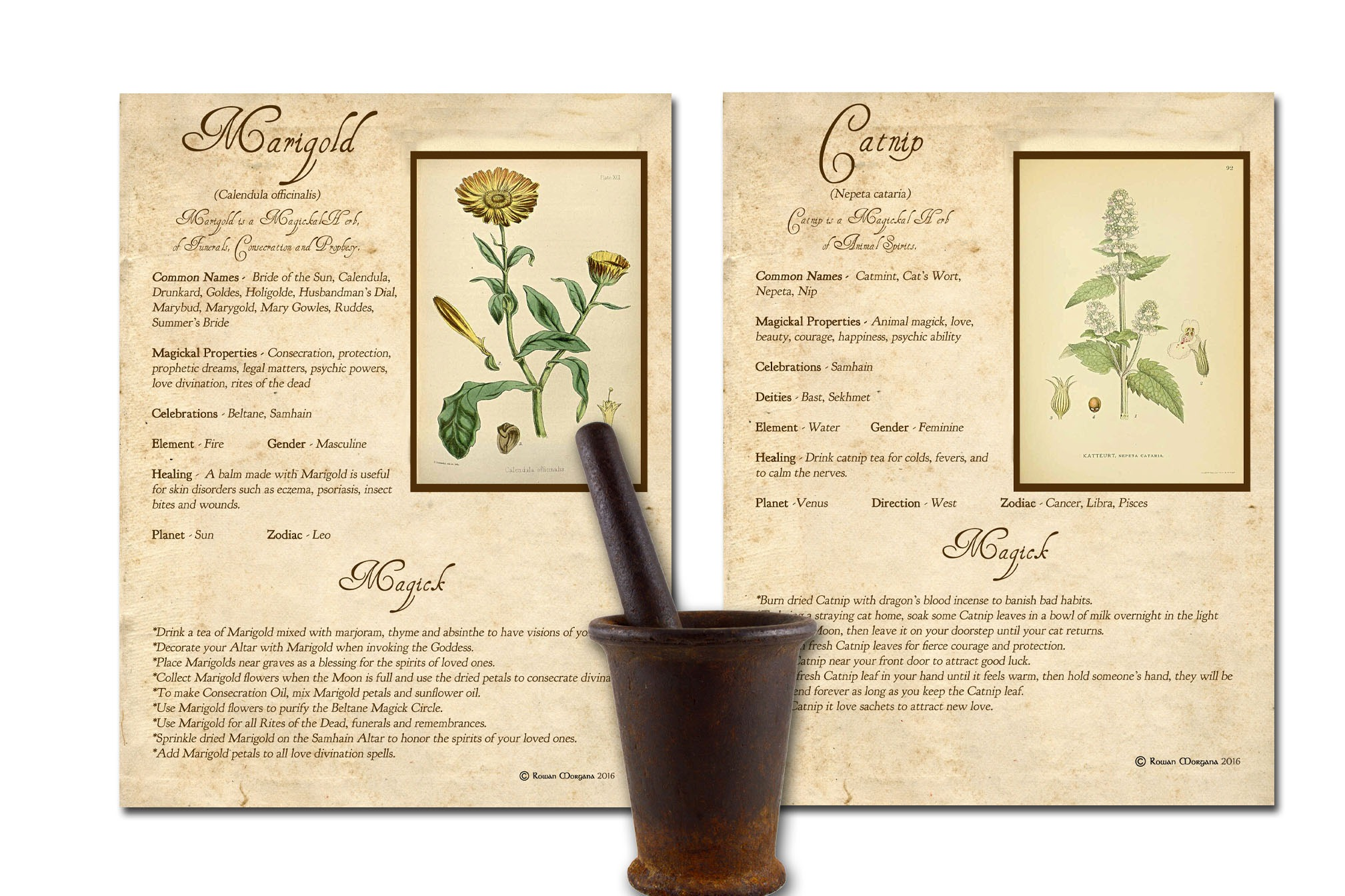 WITCHCRAFT HERBS *All 10 Pages*