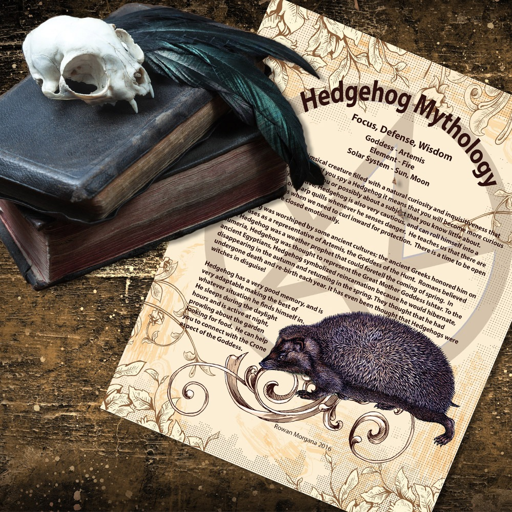 HEDGEHOG MYTHOLOGY and CORRESPONDENCES