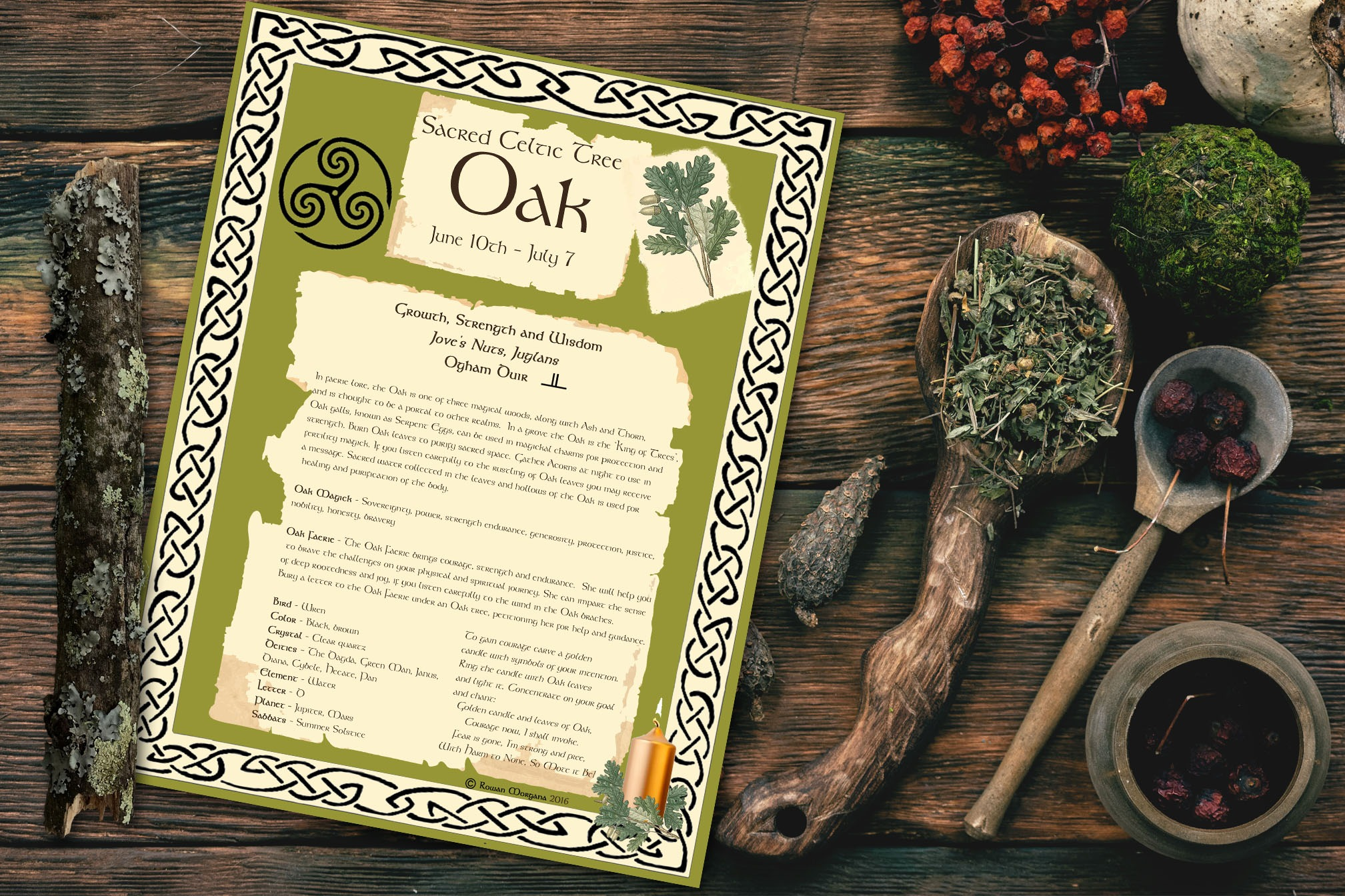 OAK CELTIC TREE