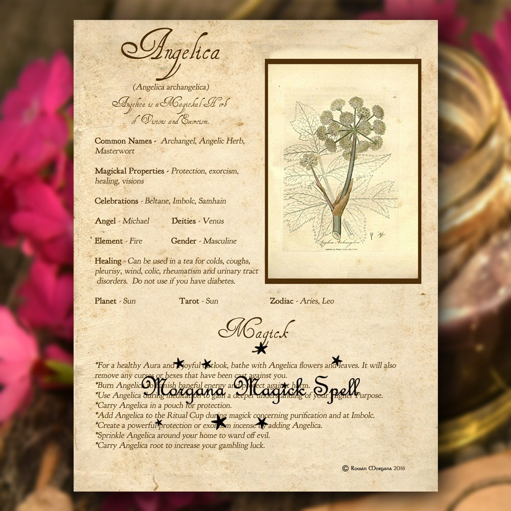 ANGELICA MAGICK HERB