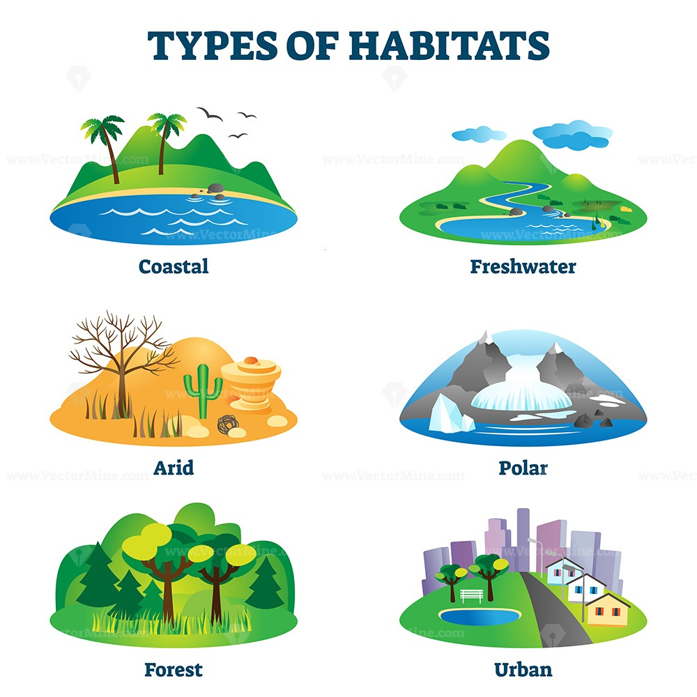 Types of habitats vector illustration