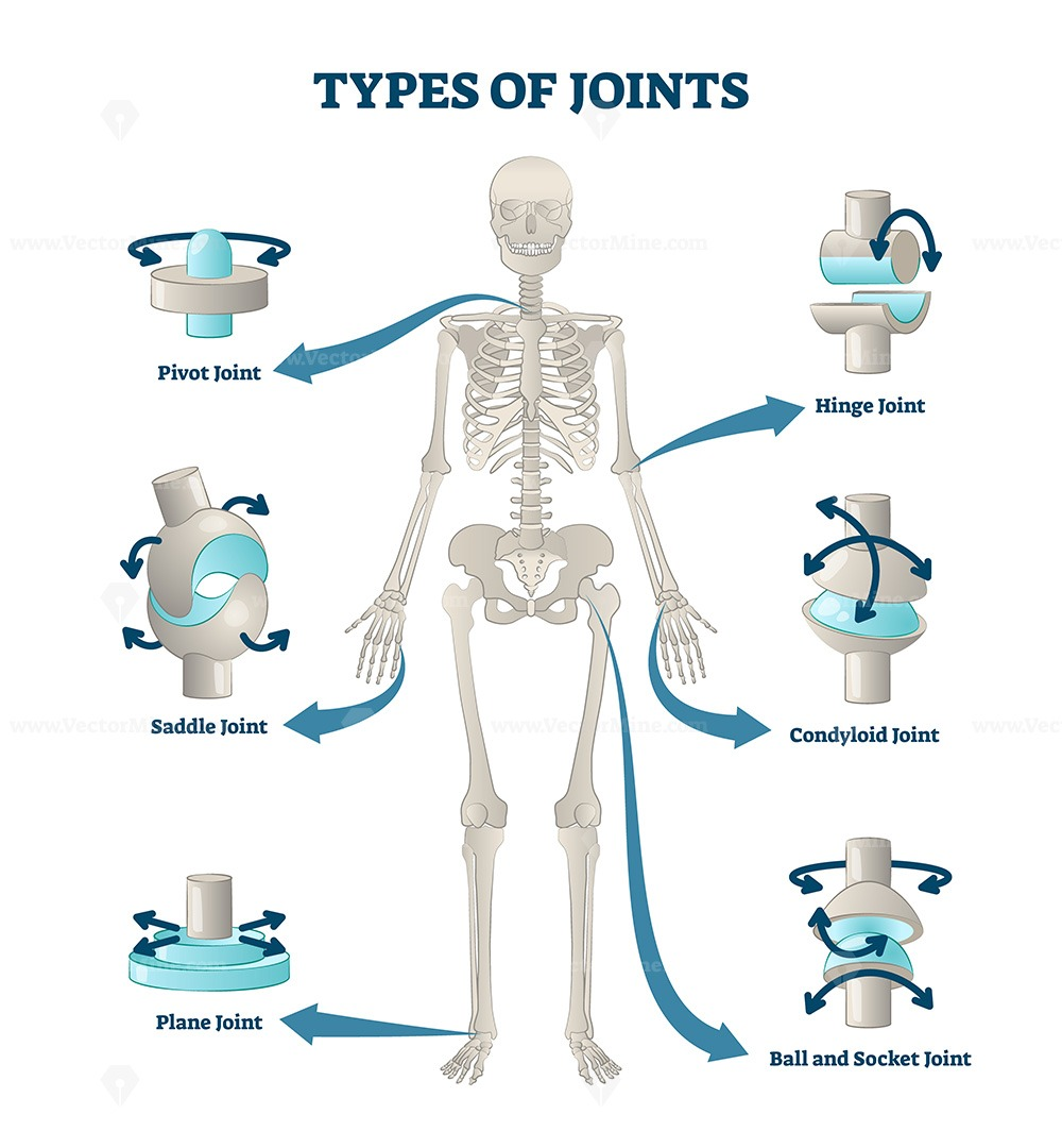 Types of joints vector illustration