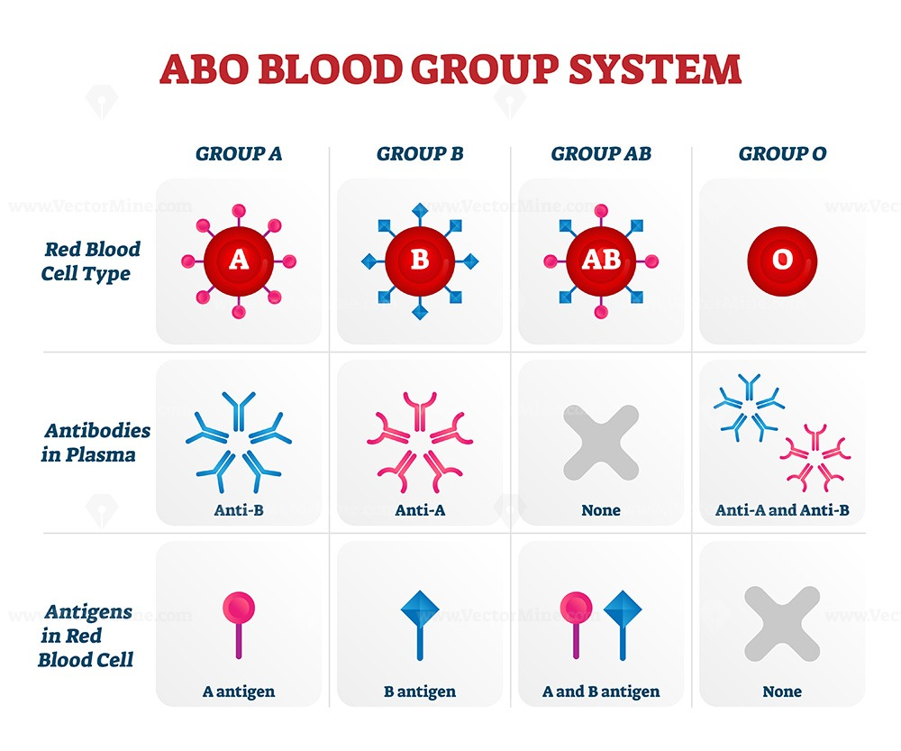 ABO blood group types vector illustration chart
