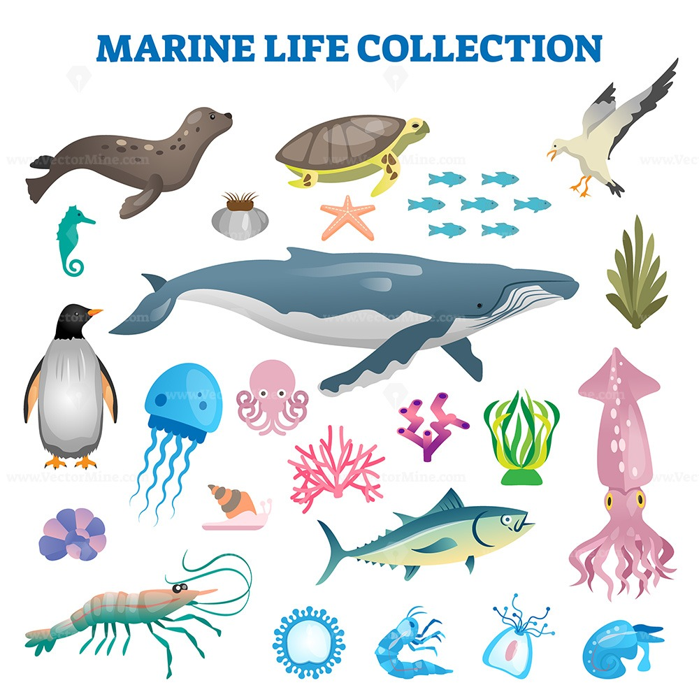 FREE Marine life collection vector illustration