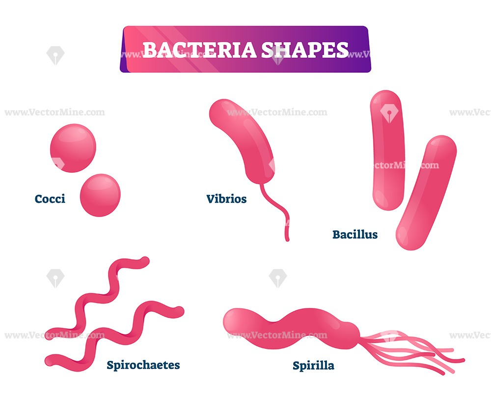 Free bacteria shapes vector illustration collection