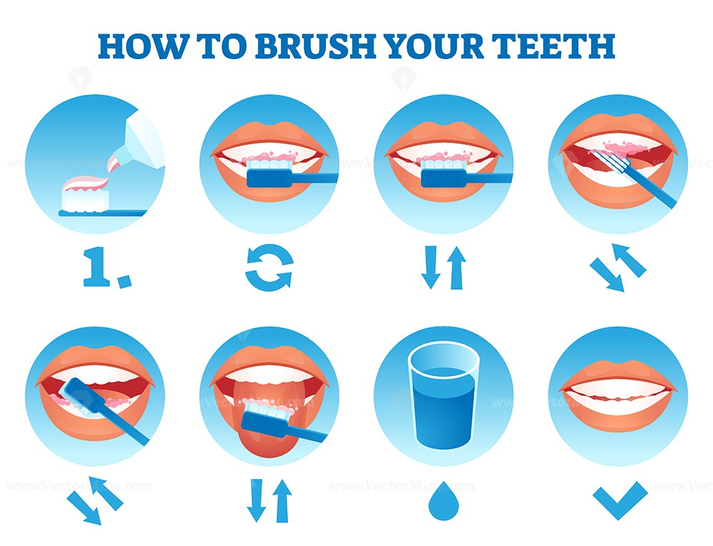 How to brush your teeth vector illustration