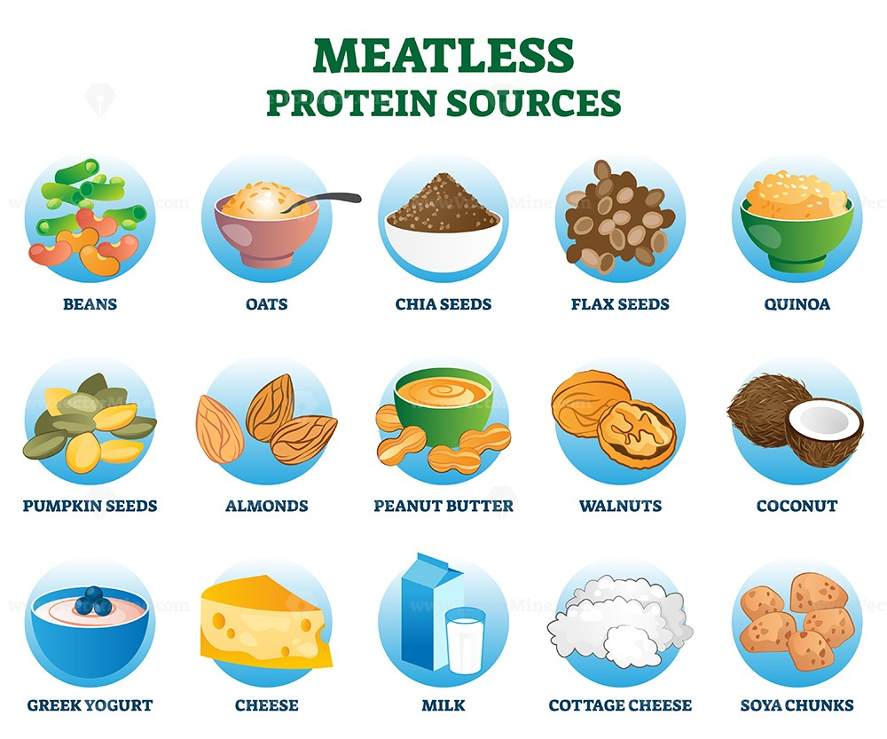 Meatless protein sources as vegetarian substitute and replacement nutrition