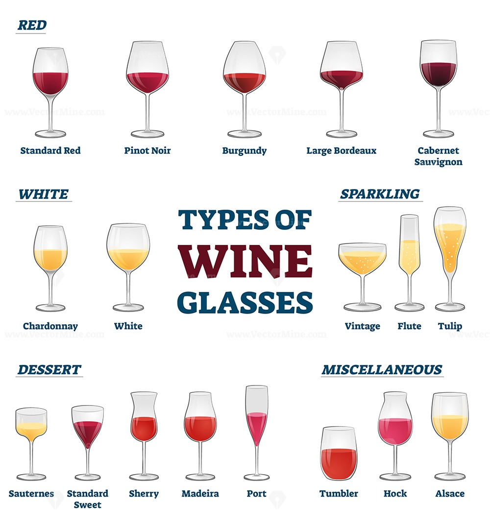 Types of wine glasses educational labeled classification example collection