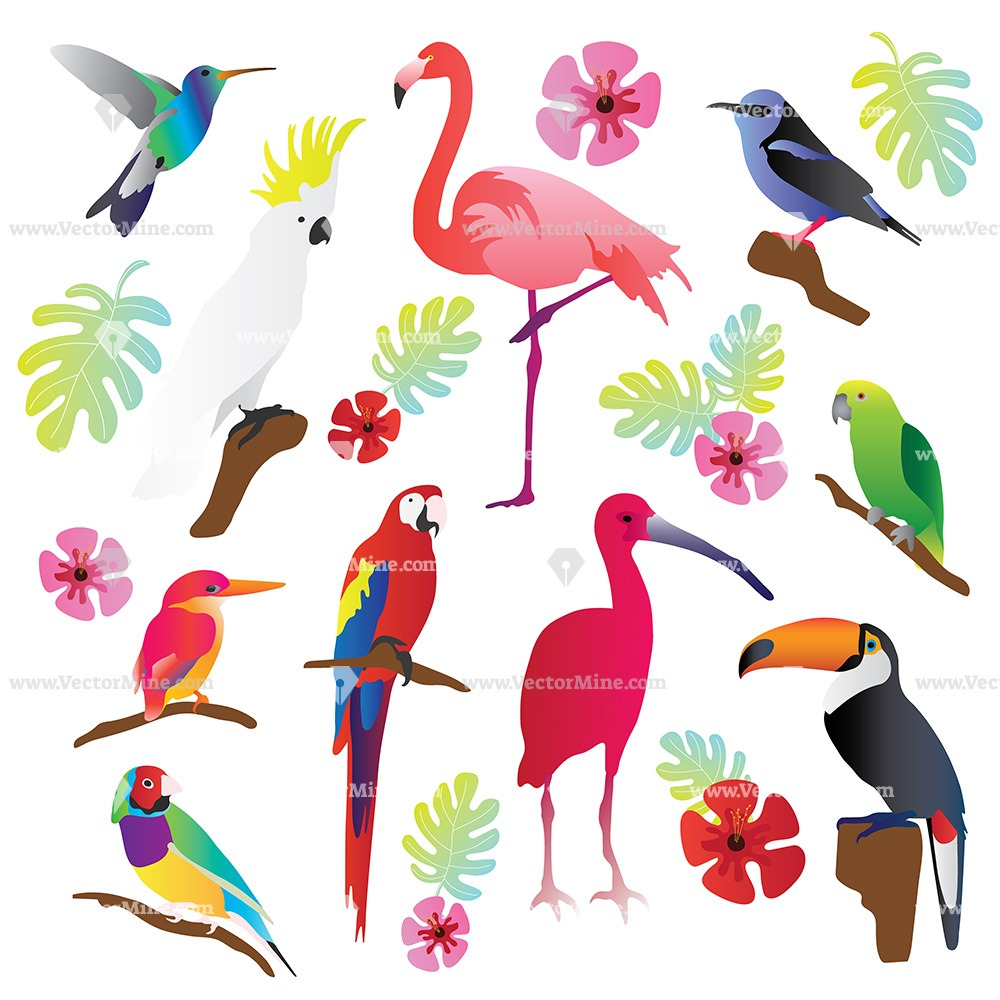 Free tropical birds vector illustration collection