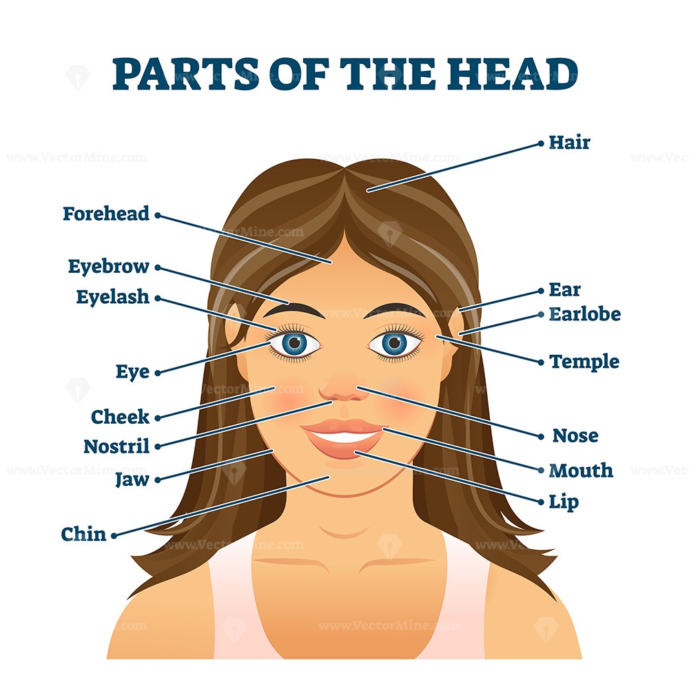 Parts of the head for english vocabulary words education vector illustration