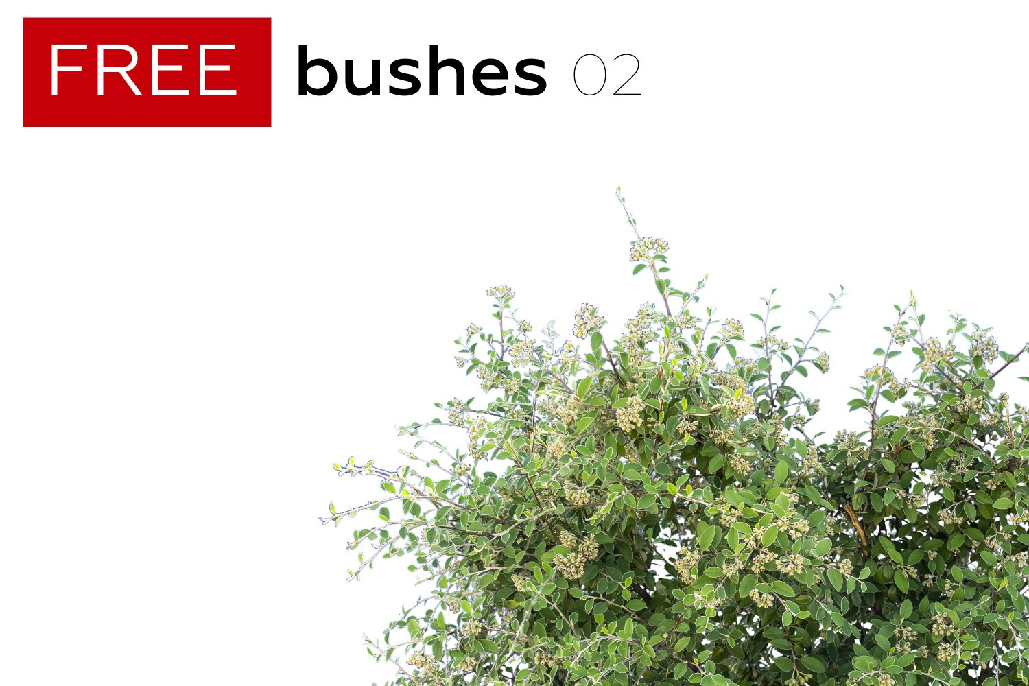 FREE STUFF - 5 Free Bushes - Volume 2