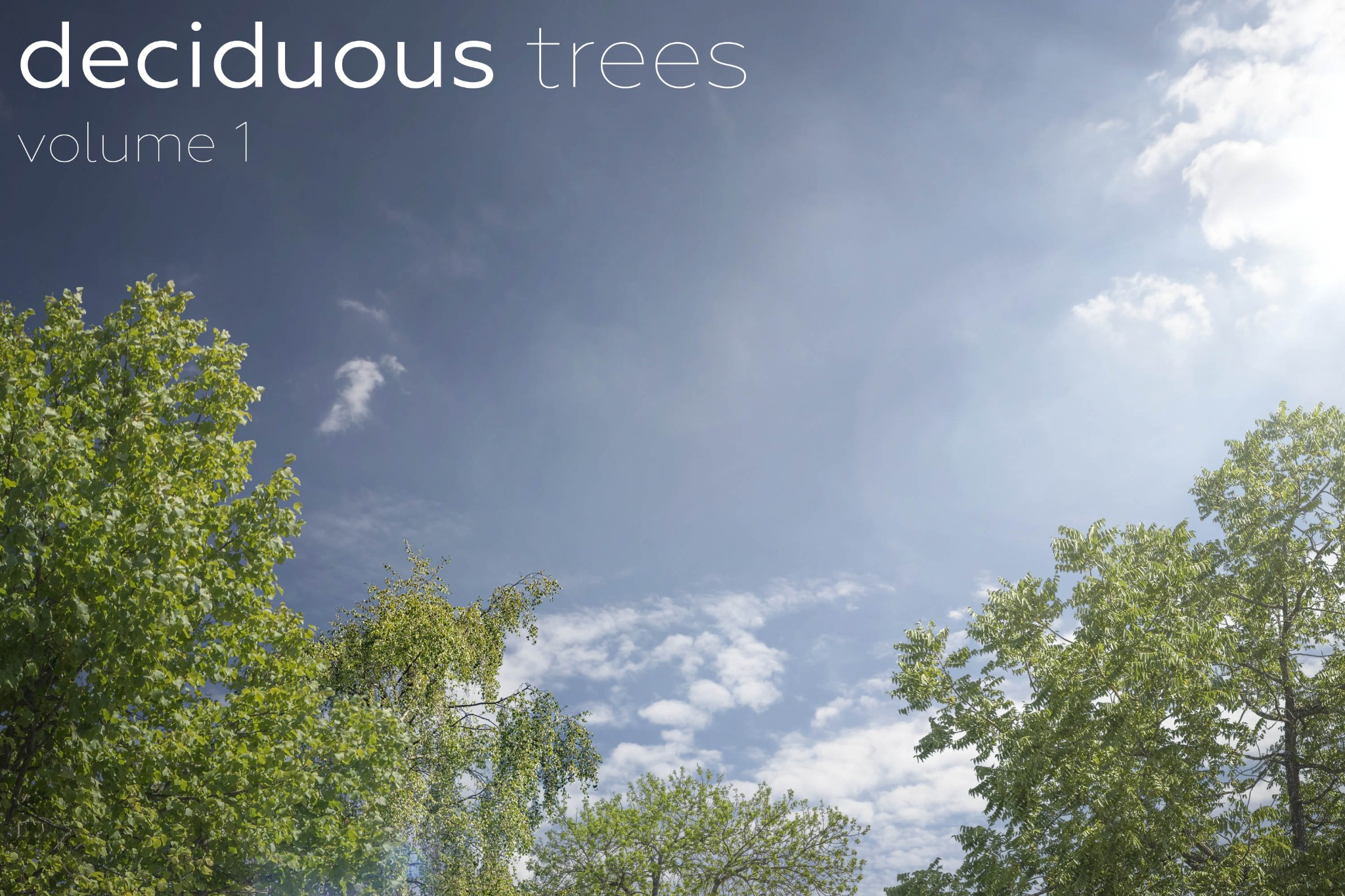 DECIDUOUS TREES Volume 1