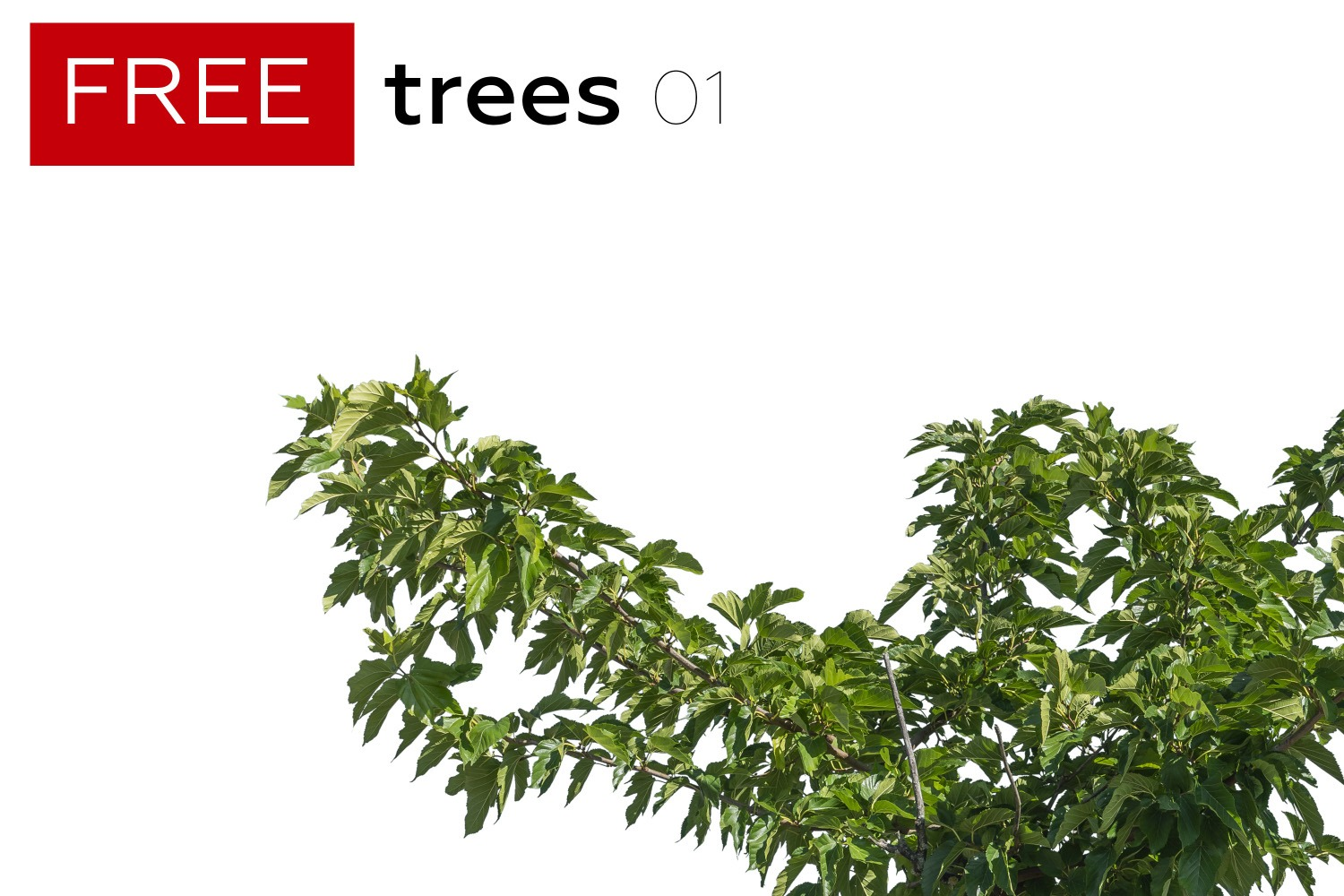 FREE STUFF - 5 Free Trees - Volume 1