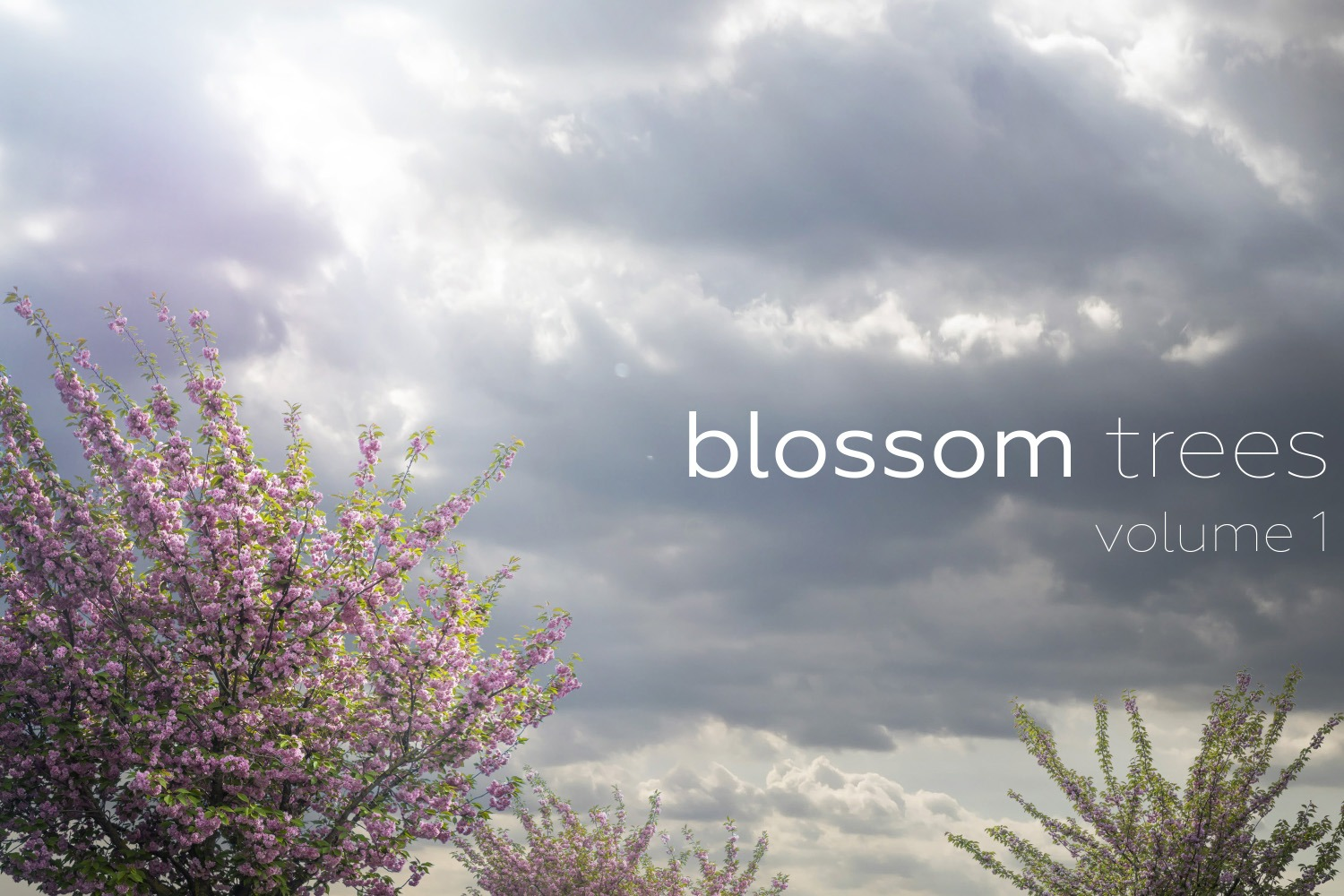 BLOSSOM TREES Volume 1