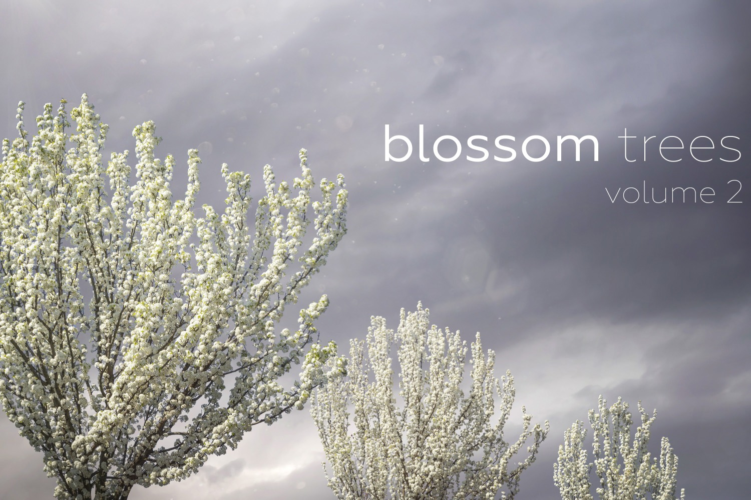 BLOSSOM TREES Volume 2