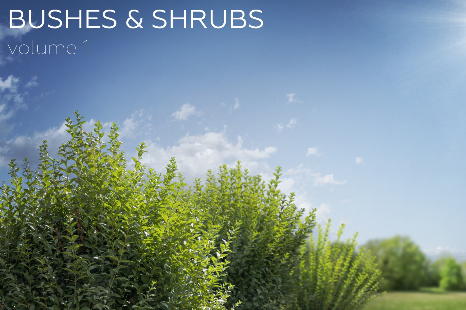 BUSHES & SHRUBS - Volume 1