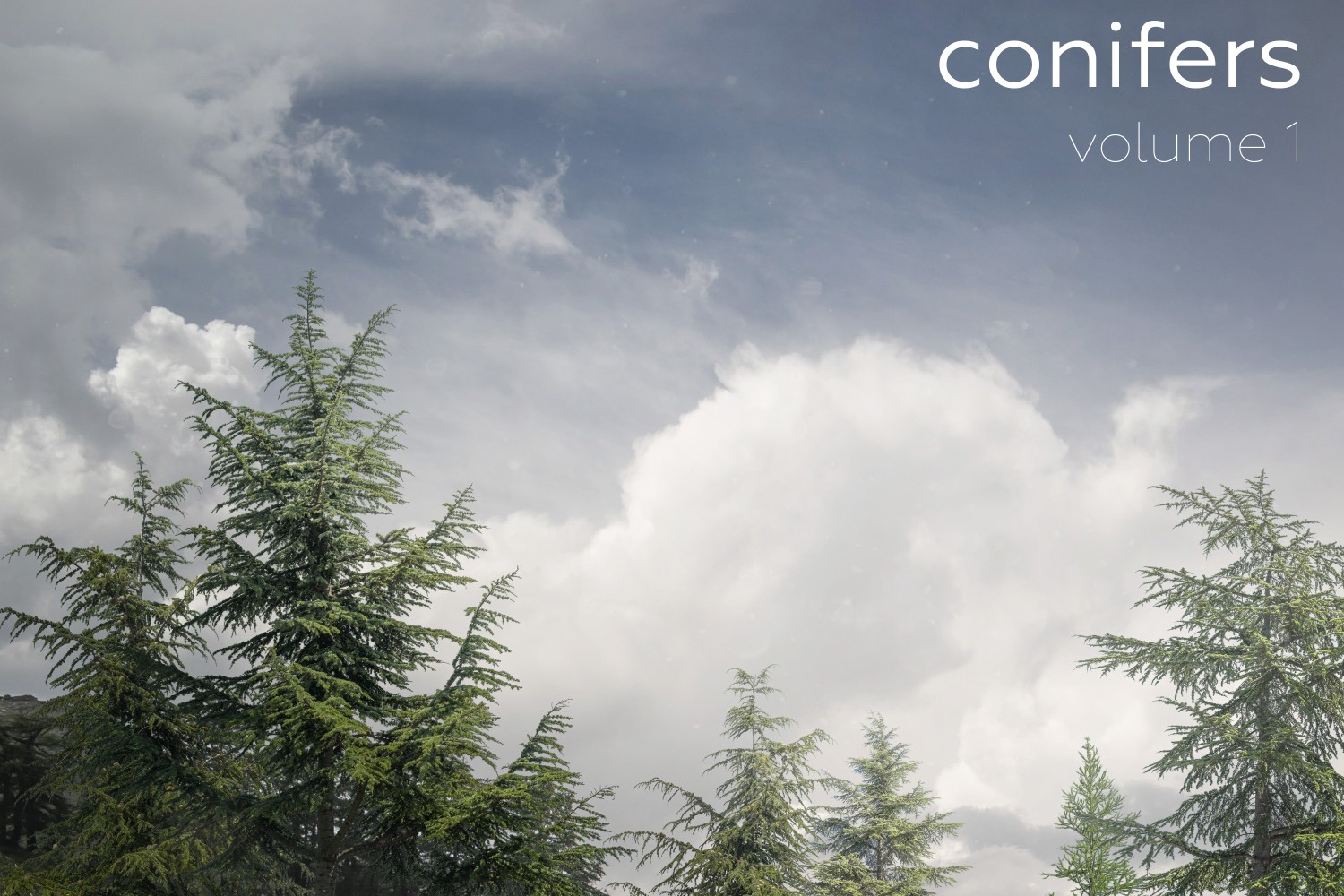 CONIFERS Volume 1