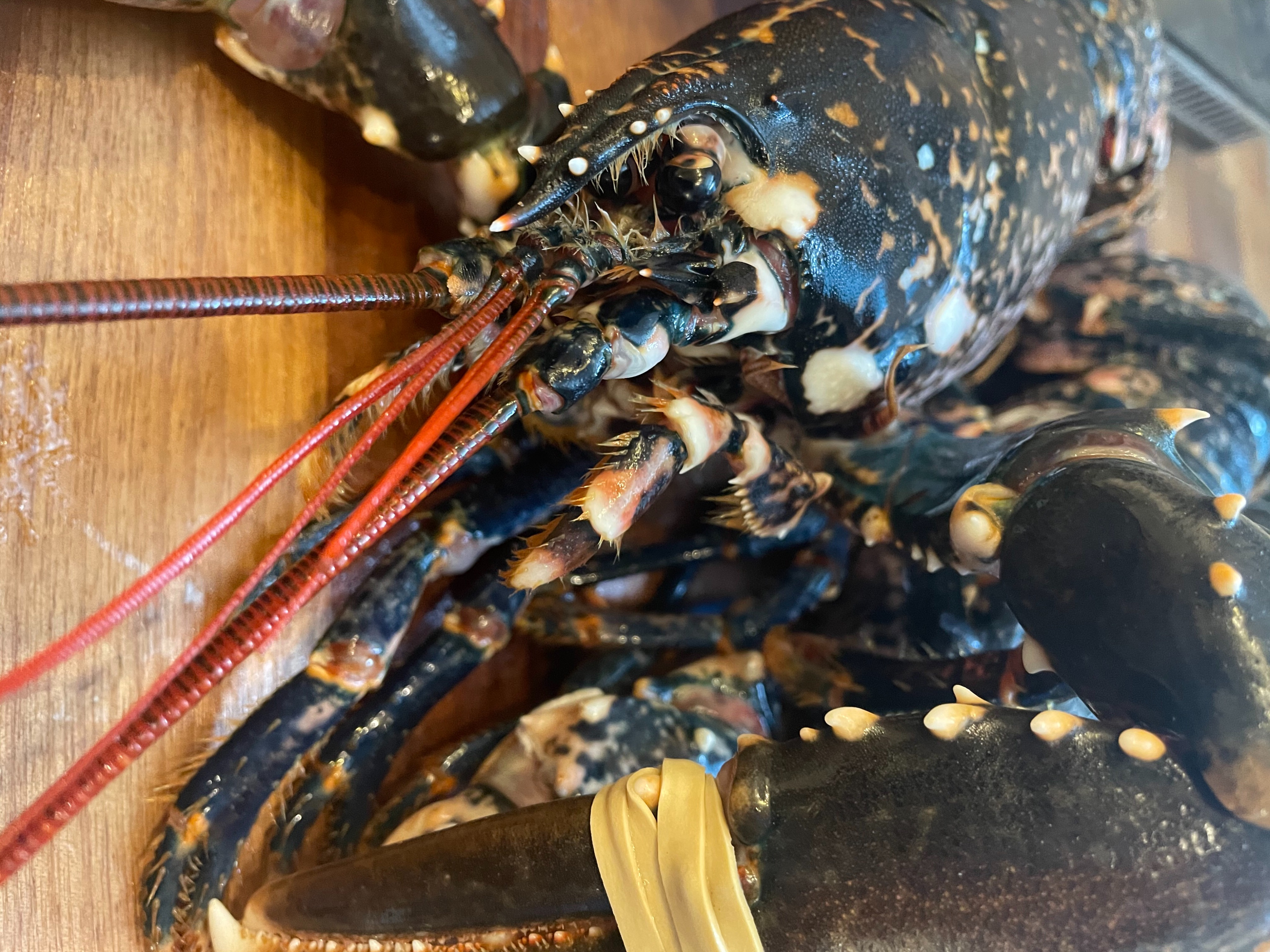 Fresh Lobster subject to availability 48 hrs notice