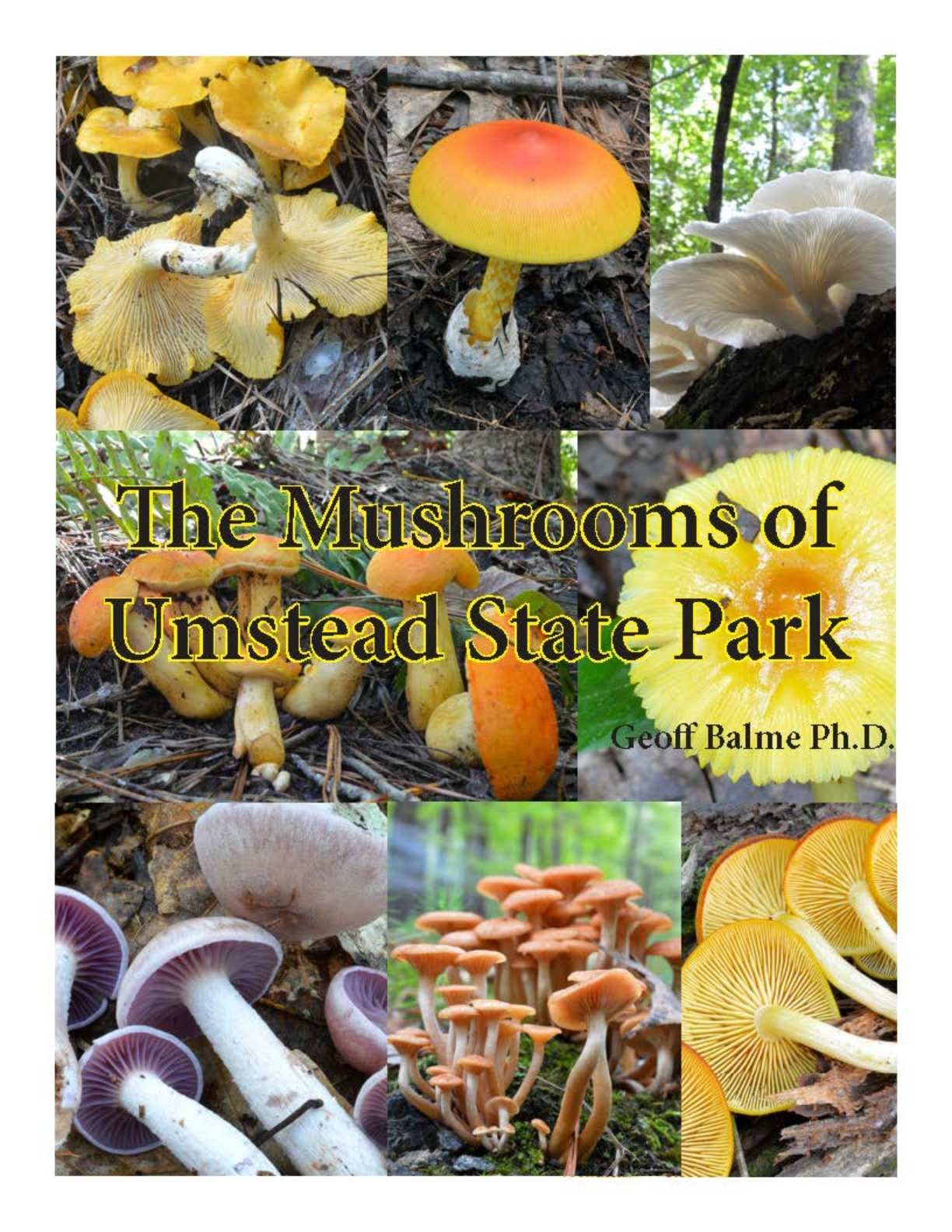The Mushrooms of Umstead State Park