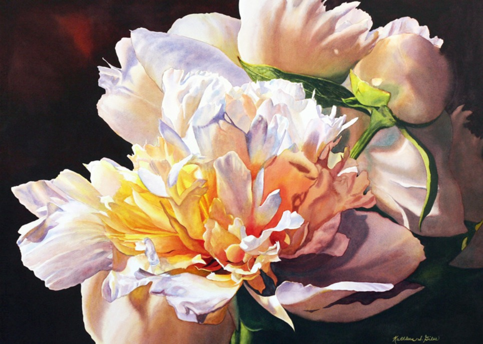 Peonies in the Spotlight