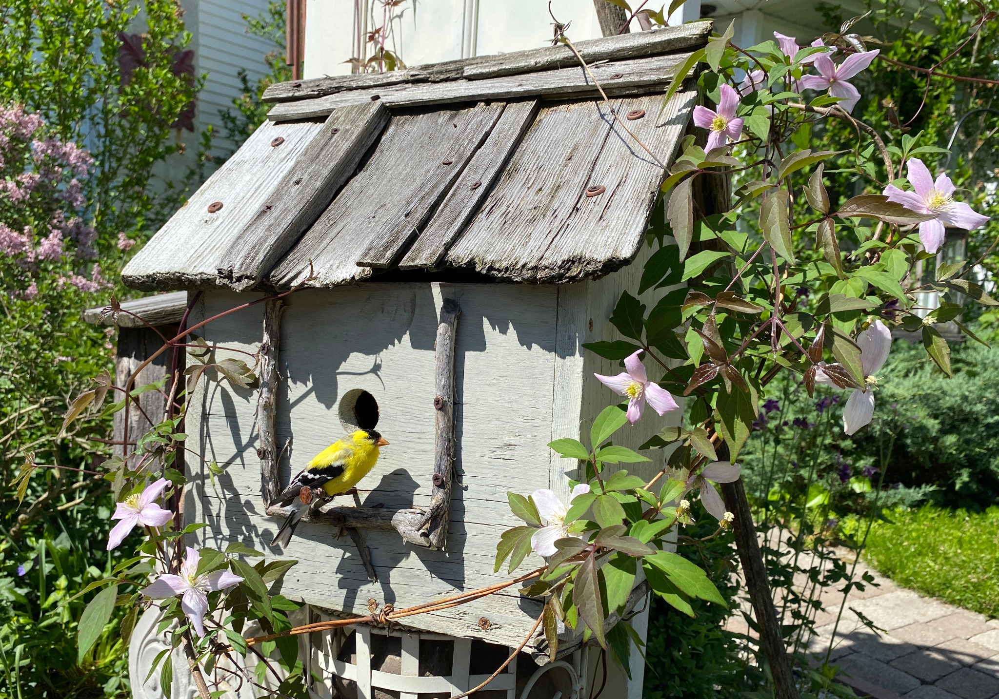 Live Birdhouse Workshop on Zoom ~ Sat. Feb 27 11am -4pm and Sun. Feb 28th 1:00- 2:30