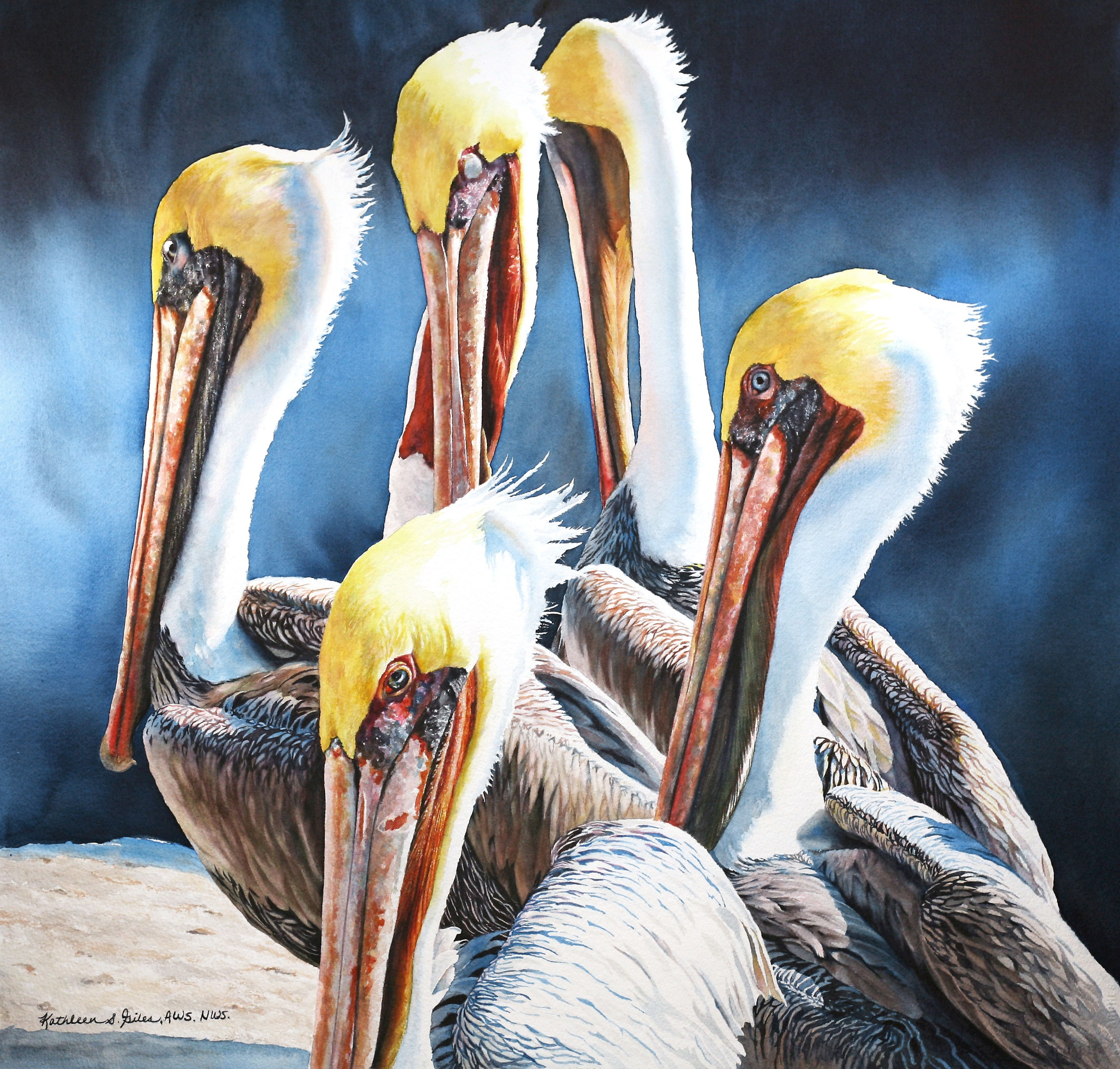 Demonstration: Painting The Background and Detail of Pelican Painting