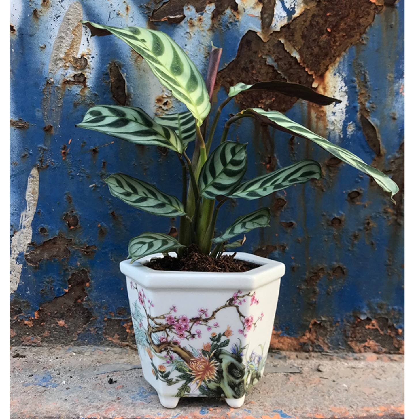 Hand painted planter MAY