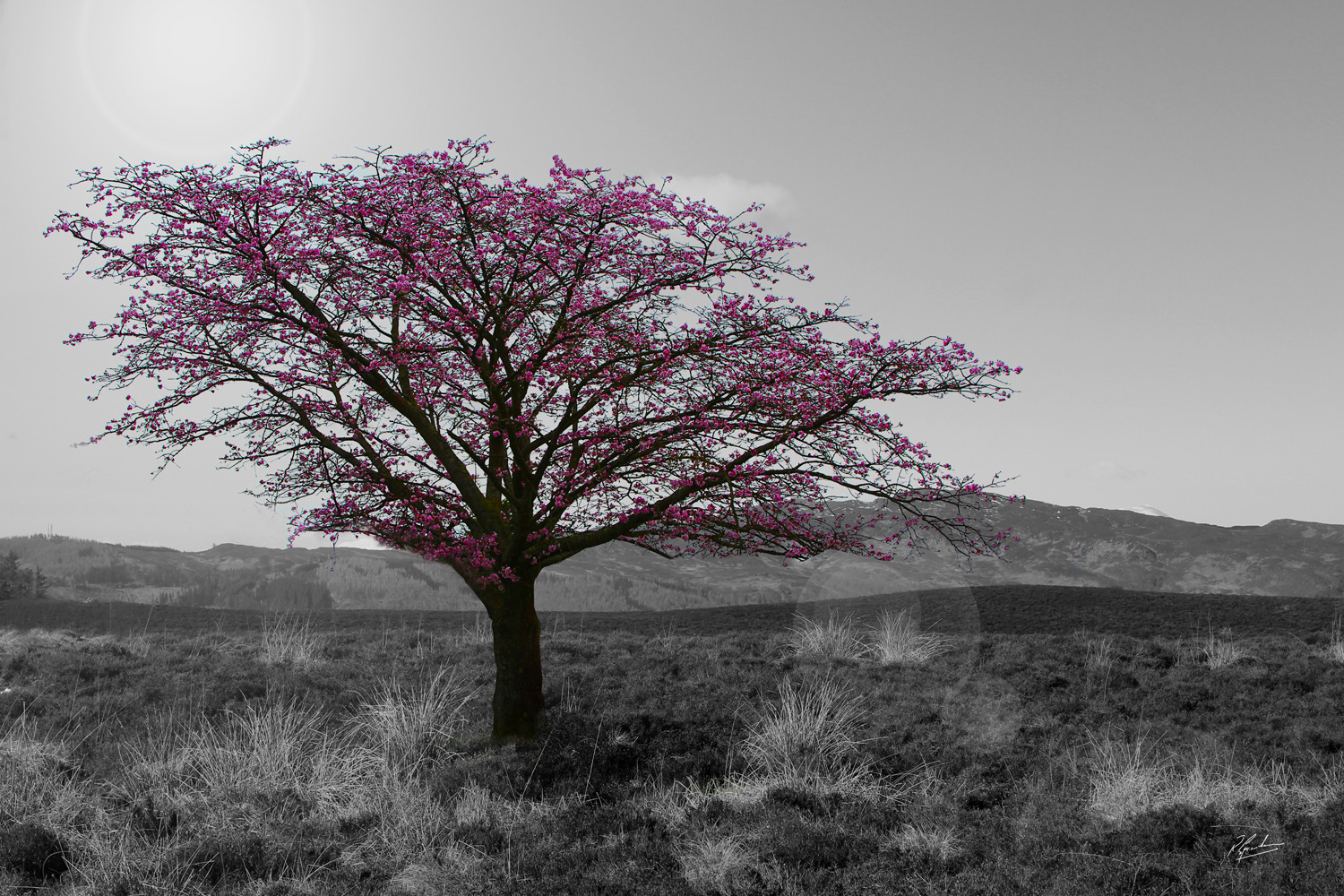 'Lonely Blossom'