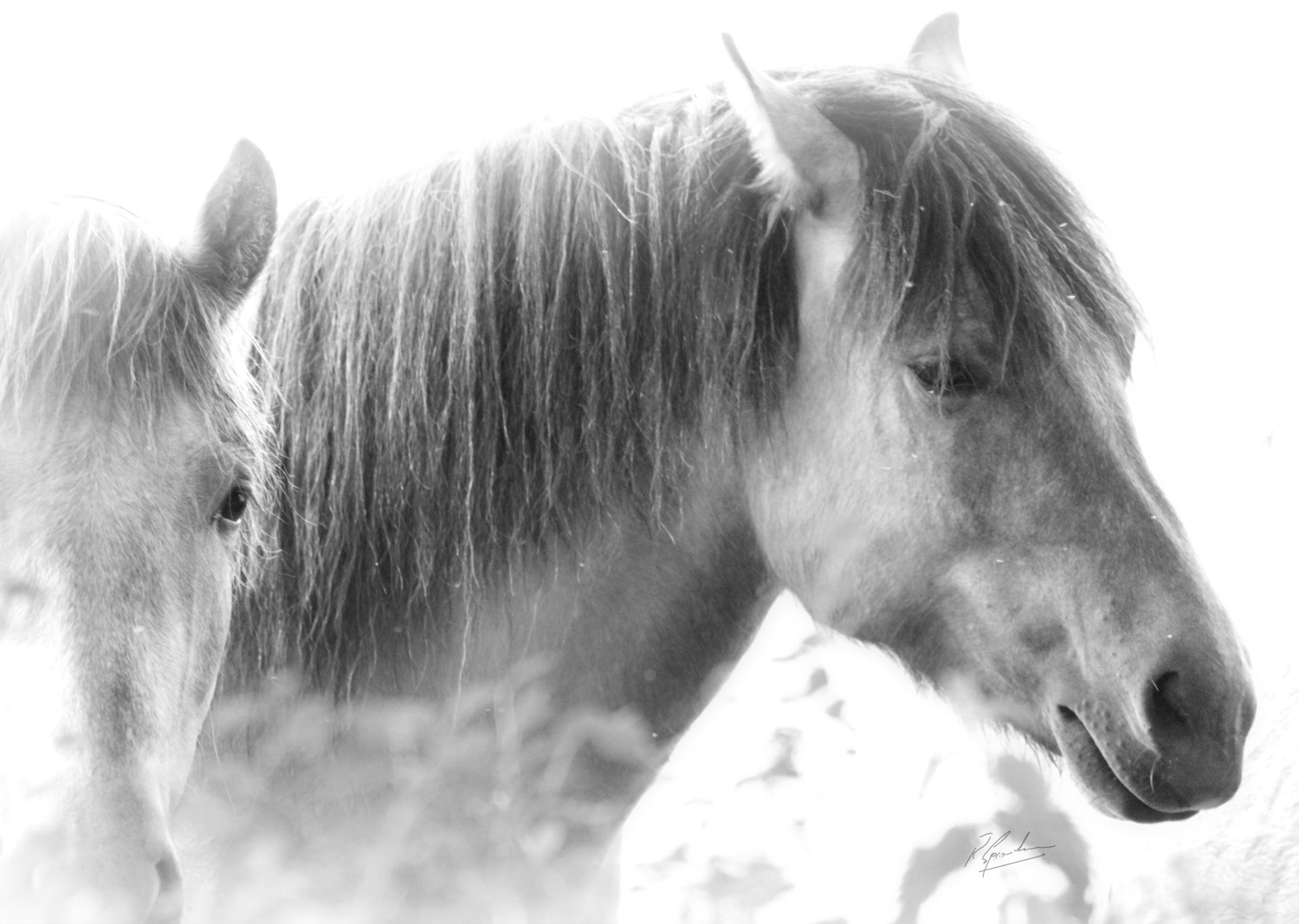 'Over Exposed Ponies'