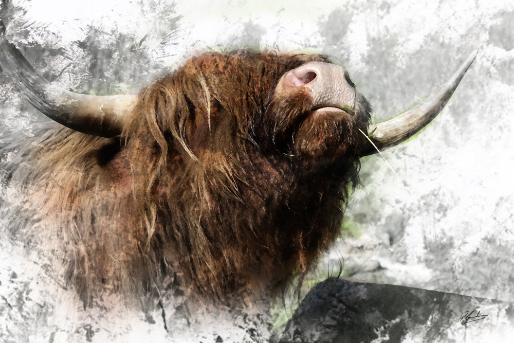 'Itchy Coo'