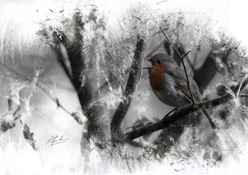 'Robin in Ink' 1