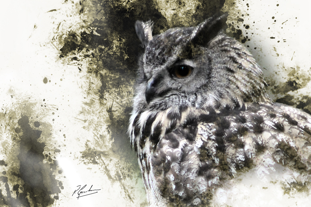 'European Eagle Owl 2'