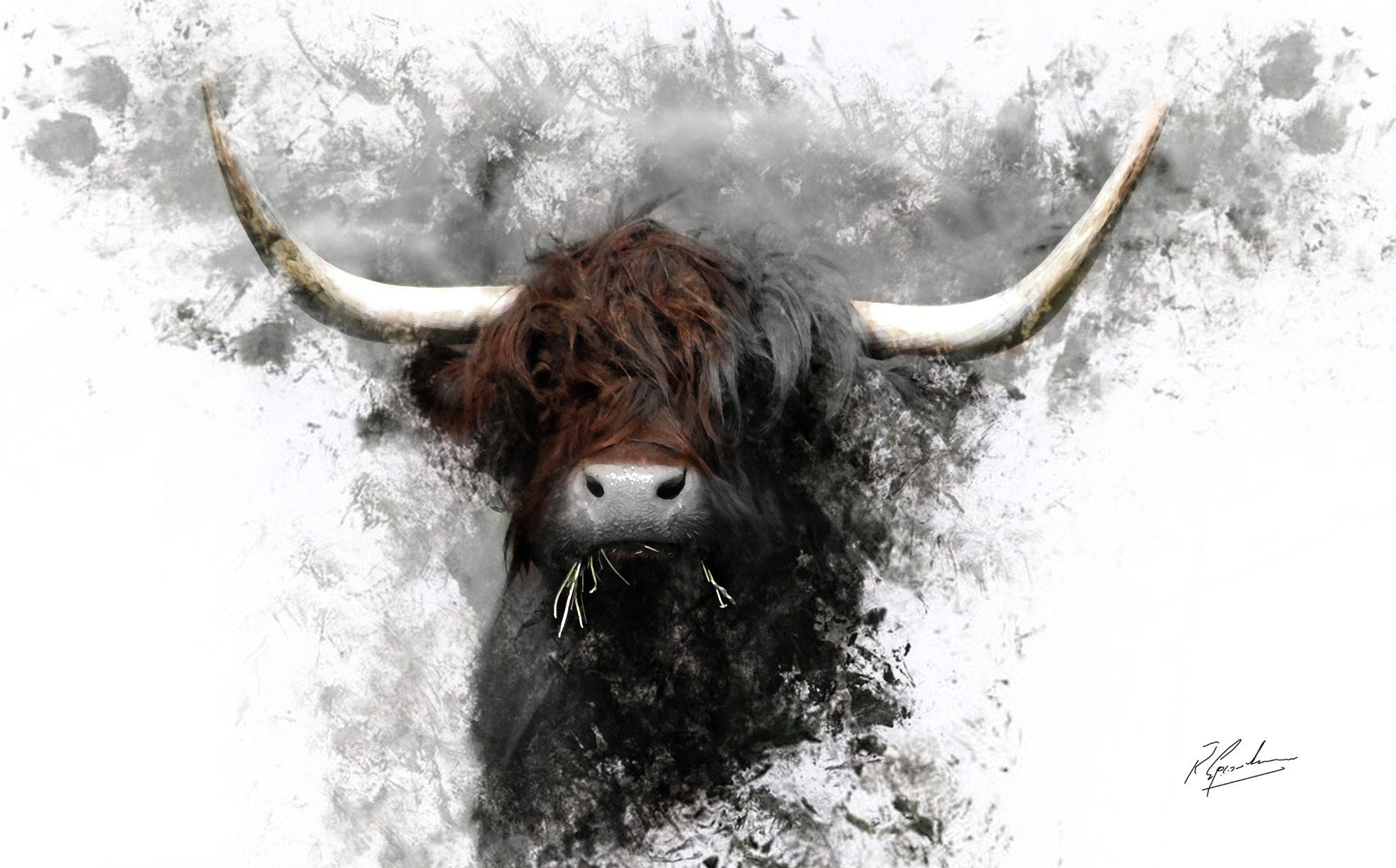 ' Highland Cow in Ink'