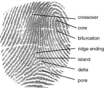 Fingerprint Study Guide